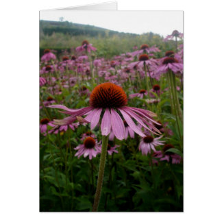 Purple flower field | Postage Card