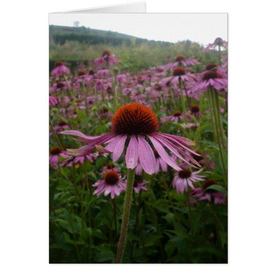 Purple flower field   Postage Card