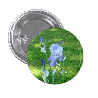 purple flower, green grass, button