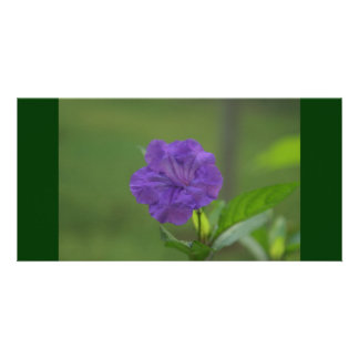 Purple Flower in Western Mexico Card