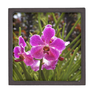 Purple flower inside National Orchid Garden Premium Jewelry Boxes