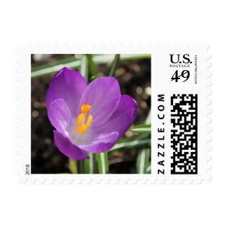 Purple Flower Oil Painting Postage