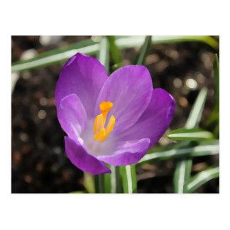 Purple Flower Oil Painting Postcard