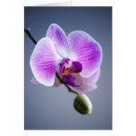 Purple Flower,  ORCHID and Bud on Stem  Note Card