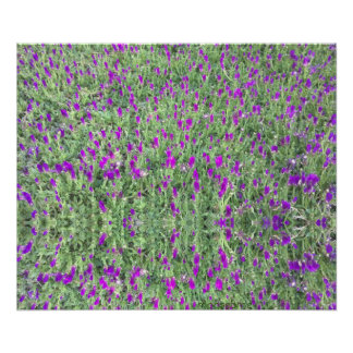 Purple Flower Patch 24x20 Reflection Print