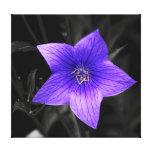 Purple Flower Photo Stretched Canvas Print