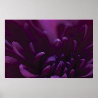 Purple Flower Photograph Poster