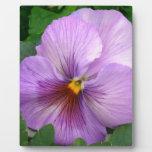 Purple Flower Placas Para Mostrar