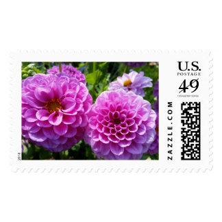 Purple Flower Postage Stamps