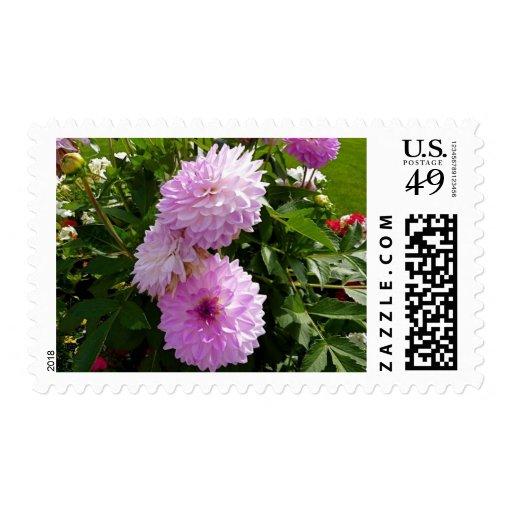 purple flower postal stamps