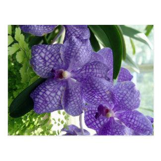 Purple Flower Postcard