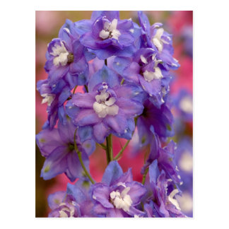 Purple Flower Postcard