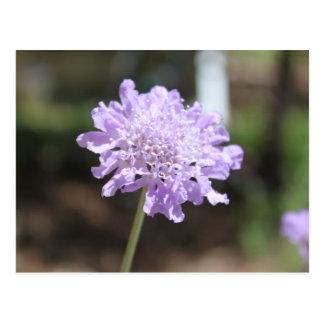 purple flower power postcard