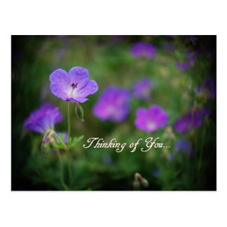 Purple Flower Power Postcard