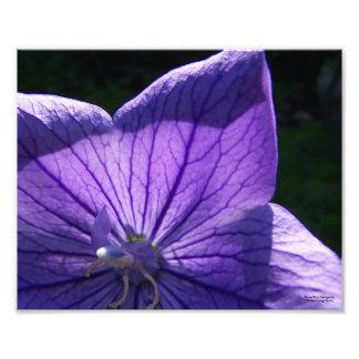 Purple Flower Print Photo