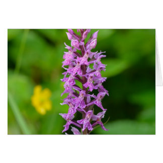Purple flower spotted orchid protected species greeting card