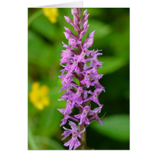 Purple flower spotted orchid protected species greeting cards