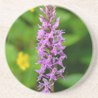 Purple flower spotted orchid protected species coasters