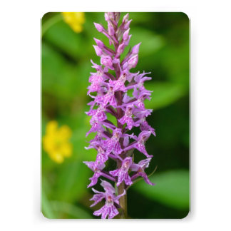 Purple flower spotted orchid protected species custom invitations