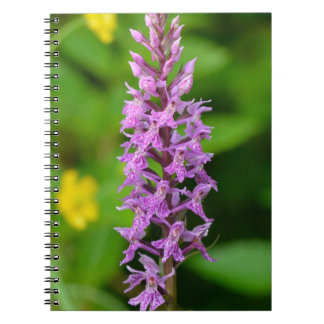 Purple flower spotted orchid protected species notebook