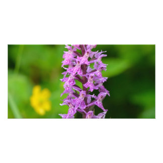 Purple flower spotted orchid protected species photo card template