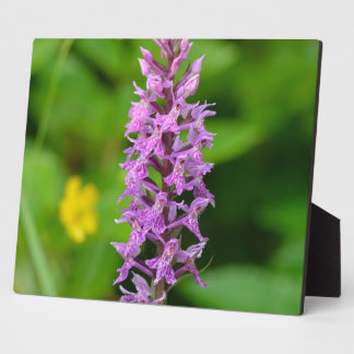 Purple flower spotted orchid protected species photo plaque