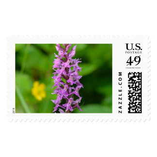 Purple flower spotted orchid protected species stamps