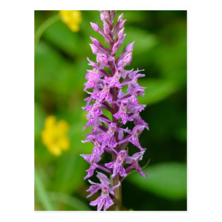 Purple flower spotted orchid protected species postcard