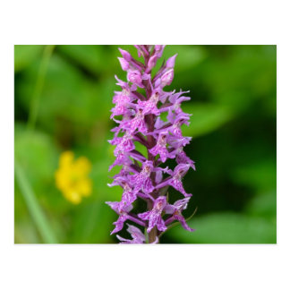 Purple flower spotted orchid protected species post cards
