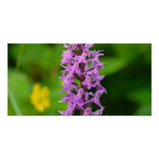 Purple flower spotted orchid protected species poster