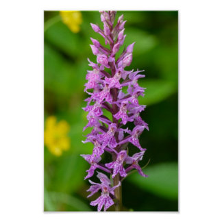 Purple flower spotted orchid protected species posters