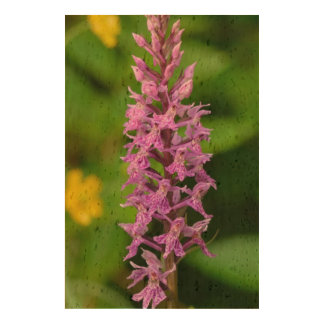 Purple flower spotted orchid protected species queork photo print