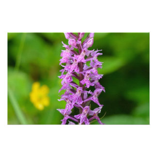 Purple flower spotted orchid protected species stationery design