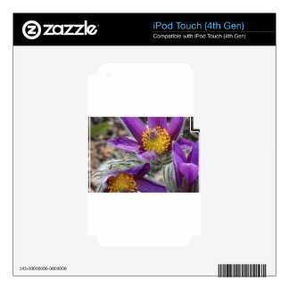 Purple Flower Yellow Stamen Decal For iPod Touch 4G