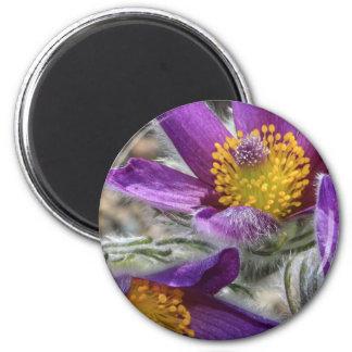 Purple Flower Yellow Stamen Magnet