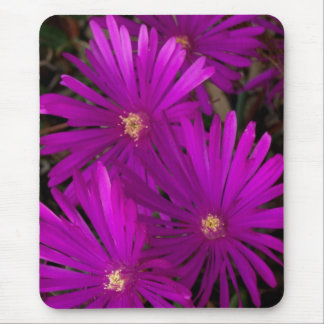 Purple Flowering Cactus Mouse Pad