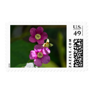 Purple-flowering Raspberry Pink Wildflower Stamps