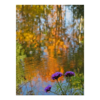 Purple Flowers and Autumn Foliage Reflections