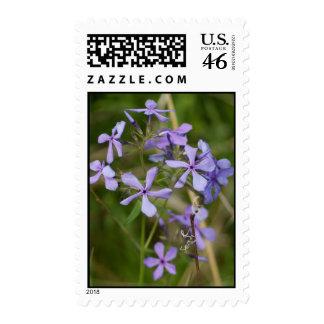 Purple Flowers in Full Spring Bloom Postage