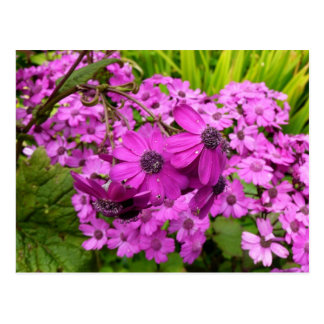 Purple Flowers in San Francisco Postcard