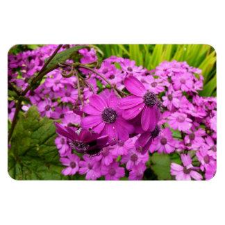 Purple Flowers in San Francisco Rectangular Photo Magnet