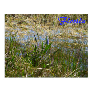 Purple Flowers in the Glades - Florida Postcard