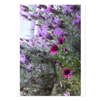 purple flowers in the yard postcard