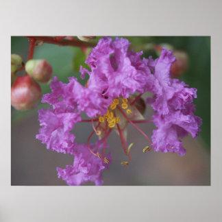 Purple Flowers Photo Poster