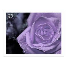 Purple Flowers - Post card