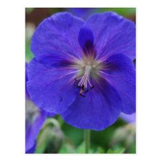 purple flowers post card