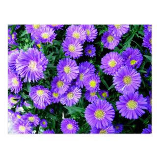 Purple Flowers Postcard