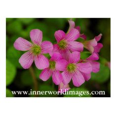 Purple Flowers Saba Post Card