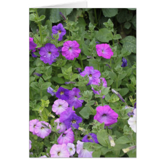 Purple Flowers Spring Garden Theme Petunia Floral Card