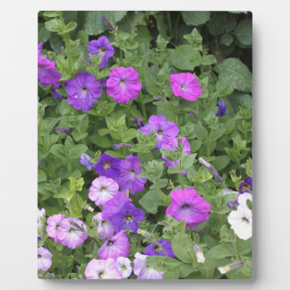 Purple Flowers Spring Garden Theme Petunia Floral Plaque